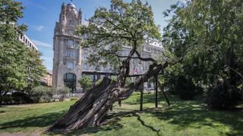 Leteszteltük az appot, ami közel hozza a budapesti fákat