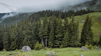 Védelmet kapnak az évszázados erdők Romániában, amiket eddig kitermeltek