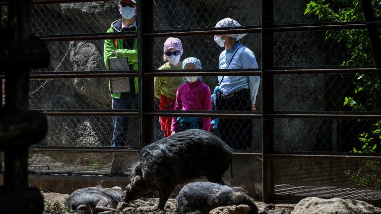 Újranyitott a budapesti Állatkert, de azért még védik az embereket és az állatokat is
