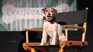 Posztumusz díjat kapott A némafilmes kutyája