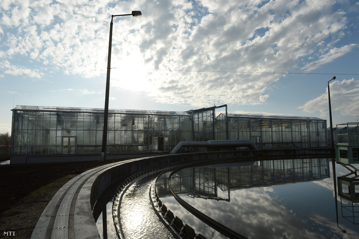 Növényekkel betelepített fedett tisztító medence a Fővárosi Csatornázási Művek dél-pesti telepén