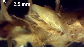 Rekordszámú ragadozó szivacsot azonosítottak ausztrál kutatók