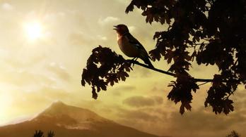 Madárfüttyös jó reggelt, 3000 madárral a világ minden részéből