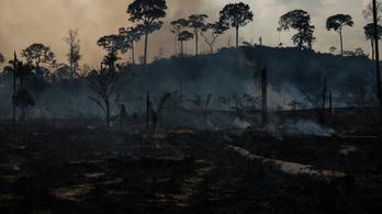 Hat másodpercenként egy focipályányi esőerdő égett le 2019-ben