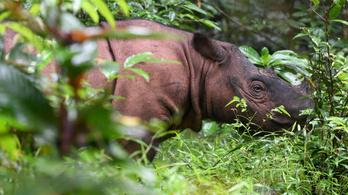 Több mint 500 állatfaj áll a kihalás szélén