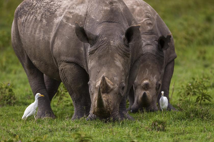 Drámai változás fenyeget az állatvilágban: minden eddiginél pontosabban mutattak rá a kutatók
