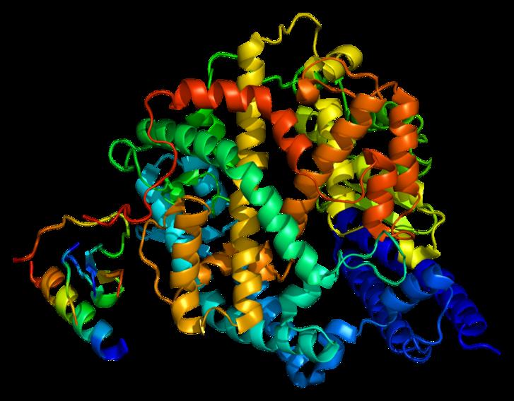 Az ACE2 mulekulaszerkezete