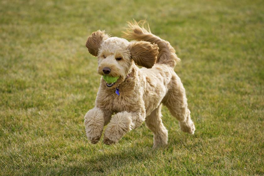 Oltári vicces büntetést kapott a rosszalkodó kutya - Imádja az internet