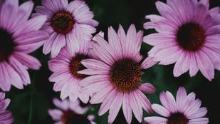Felismered képről a vadvirágokat?