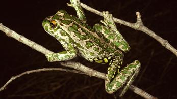 Féktelen zabagép fenyegeti Ausztrália biológiai sokféleségét