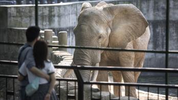 Miért lesznek nagyon ritkán rákosak az elefántok és bálnák?