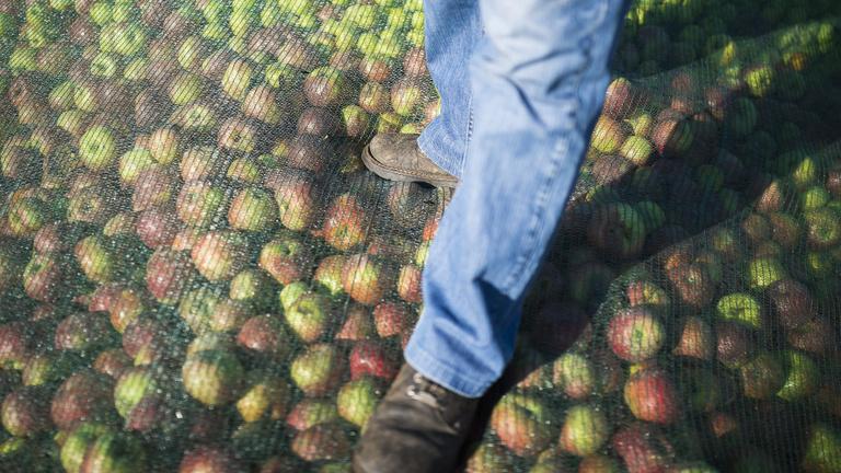 A kormány szokatlan eszközökkel védené a gazdákat