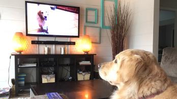 A kutyák is tudnak úgy tévézni, mint az emberek