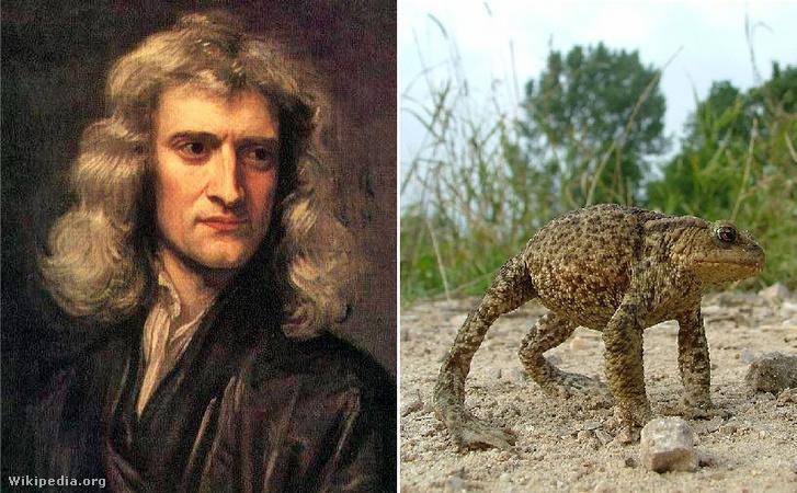 Isaac Newton (balra) és egy barna varangy