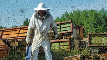 Tízezer méh szabadult ki egy kiskunhalasi balesetben