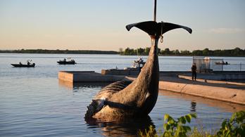 Elpusztult a Montrealba tévedt hosszúszárnyú bálna