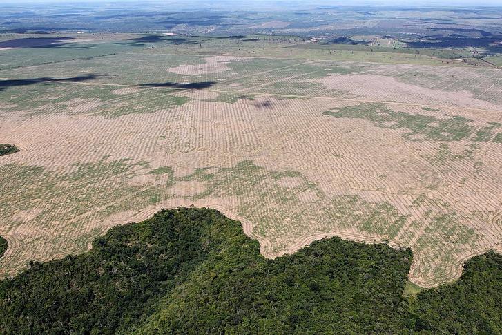 Erdőirtás határa Maranhao államban