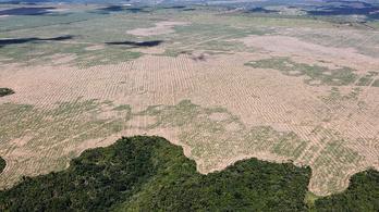 Több mint 10 ezer négyzetkilométer esőerdőt irtottak ki tavaly Brazíliában
