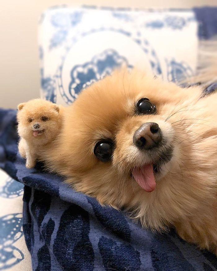 mini kutya 5