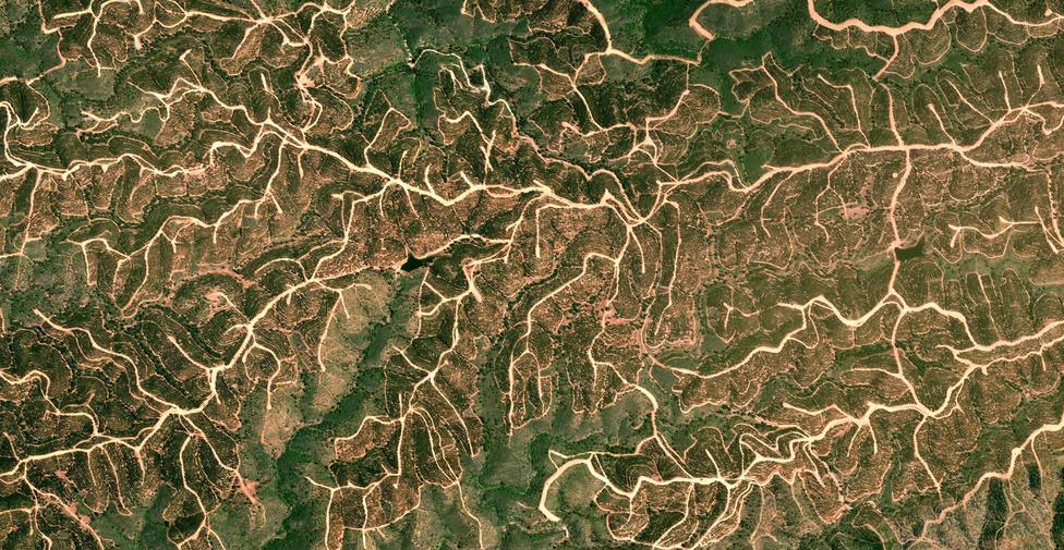Hegygerincek a Pireneusokban