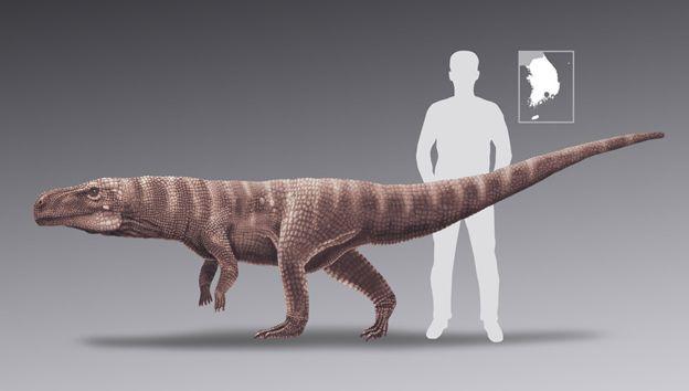 Az őskrokodil magassága nagyjából egy méter lehetett
