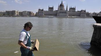 Új patkányirtási közbeszerzést készít elő a főváros