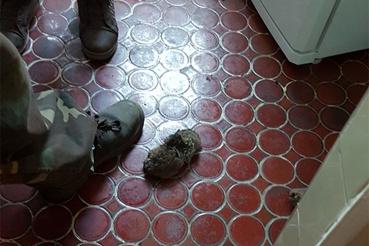 """""""Március 17-én reggel a dög felmászott a WC lefolyó csövén keresztül és mivel a WC tető nem volt lecsukva kimászott a kagylóból. Miután kinyitotta a WC ajtót, és felkapcsolta a villanyt, az állat a lábát súrolva berohant a lakásba."""""""