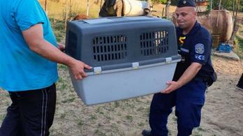 Szívszorító körülmények közt szenvedő kutyákat mentett a rendőrség
