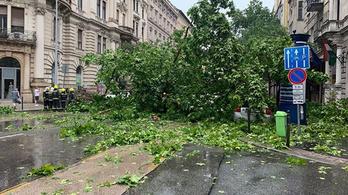 Budapest főkertésze: Hiába tudták, hogy veszélyes az Alkotmány utcai fa, politikai okok miatt nem lehetett kivágni
