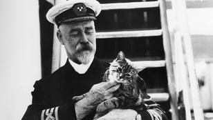 Vigyázat, macska a fedélzeten! Katonák, akik nem indultak el cica nélkül