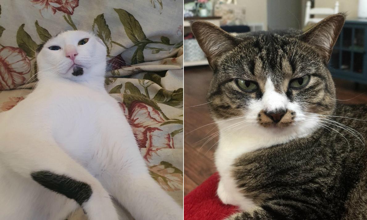 ideges macska nyitó
