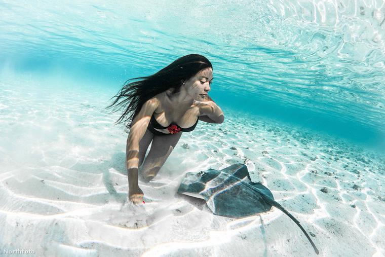 Egy francia fotós teljesen ráizgult a rája és bikinis modellek kettősére, és rengeteg vízalatti képet készített, melyeken a például Tajvanról származó modellek a rájákhoz egészen közél merészkedve velük együtt úsznak