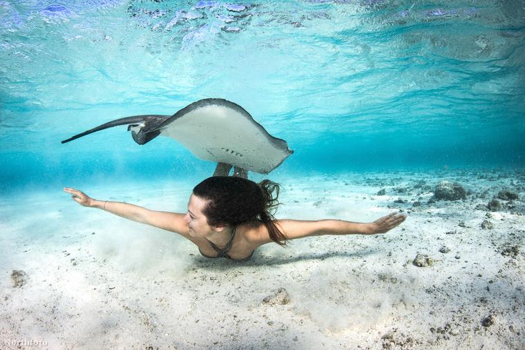 A képeken látható ráják 70 méter vízmélységben is tudnak élni, de gyakran a vízfelszínhez közel úszkálnak, az emberek társasága sem zavarja őket, ahogy azt a képekből is kikövetkeztethette