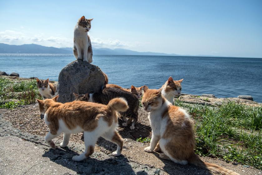 Maszk a macskán | Magyar Nemzet
