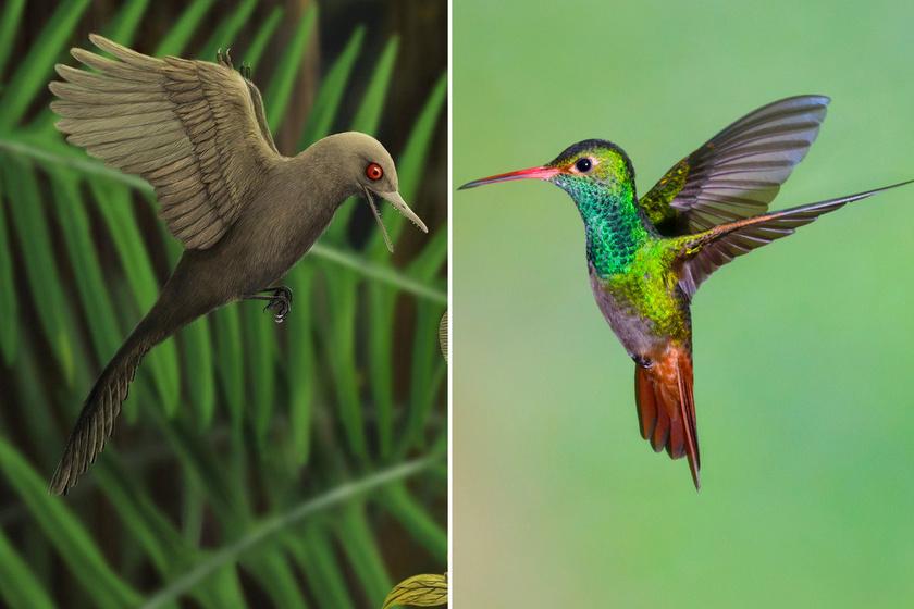 Balra a dinó, jobbra egy kolibri látható viszonyításképp.