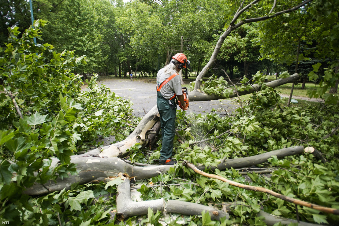 A Főkert Nonprofit Zrt. szakembere az előző napi viharban letört faágakat takarít el a budapesti Városligetben 2015. július 9-én.