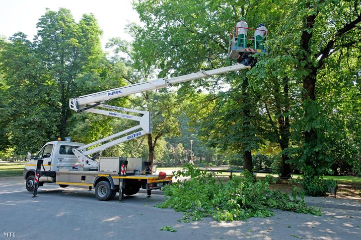 Fát gallyaznak egy emelőkosaras járműből a Főkert munkatársai a Margitszigeten 2013. június 21-én.