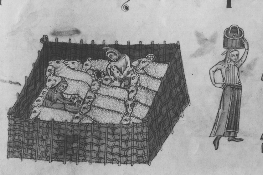 kozepkori barany
