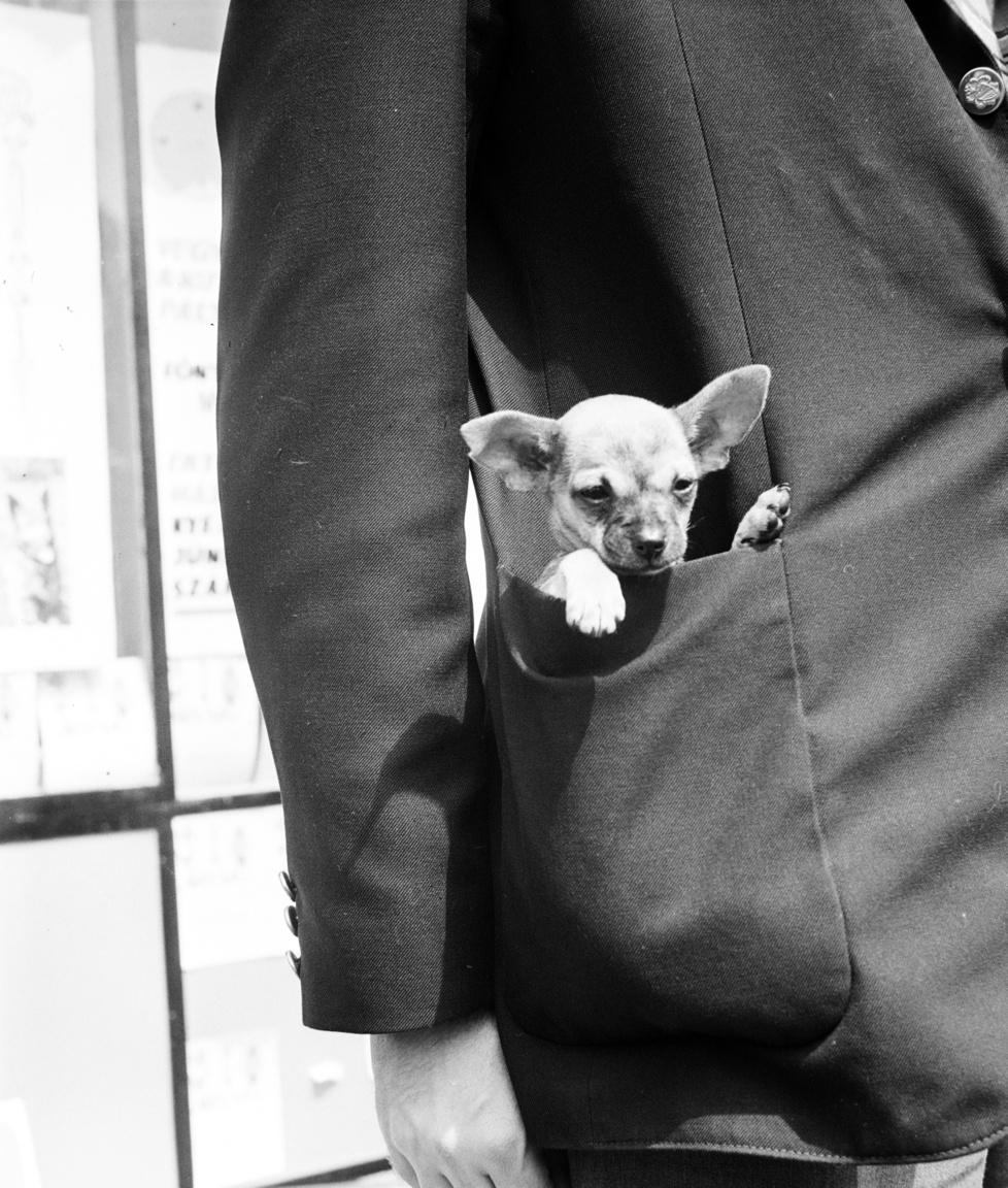 Mivel Bojár képei kutyakiállításokon készültek, fajtatiszta, törzskönyves kutyák láthatóak rajtuk. Ezen a ponton fontos azt megjegyezni, hogy a kutyák különbözőségében a tudatos tenyésztésnek, a kutyafajták különböző külső tulajdonságokra és természetbeli jellemzőkre való szelekciójának fontos szerepe van. Ha valaki fajtatiszta kutyára vágyik, akkor a törzskönyvezés ma sem csak úri huncutság. Ahogy ebben a cikkben korábban részletesen megírtuk, azért is szükség van a törzskönyvre, hogy igazolva legyen, az eb tenyésztőtől és nem szaporítótól származik.