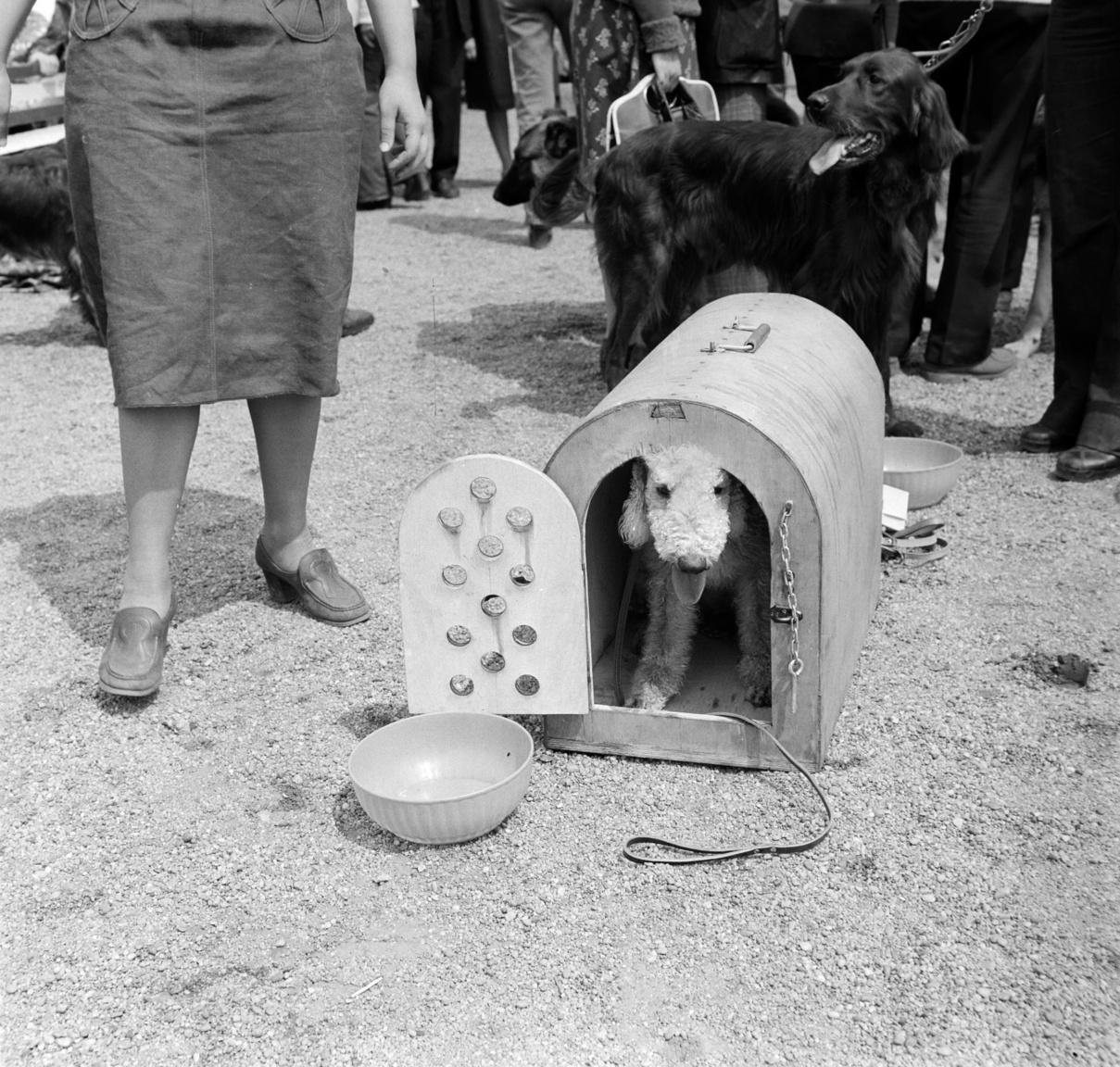 """Az 1800-as évek második felében kiadott, Czuczor-Fogarasi féle A magyar nyelv nagyszótára szerint a kutyának még nem a háziállat volt az elsődleges jelentése:""""1) Széles állattani ért. azon emlős állatok neme, melyeknek mindkét állkapczájokban hat egyenetlen hosszúságú előfoguk, hoszszu , hegyes , görbe szemfogaik , hat vagy hét zápfoguk mindkét oldalon , homlokuk hosszában barázdás vonaluk, és öt körmű lábaik vannak. Ide tartoznak, a farkas, róka, a házi kutya stb. (Canis). 2) Szorosb és szokott ért. a fennemlített nem alá tartozó , köz ismeretü kutyafaj, melyet máskép házi kutyá-nak, kizárólag ebnek hivunk. (Canis familiaris)."""""""