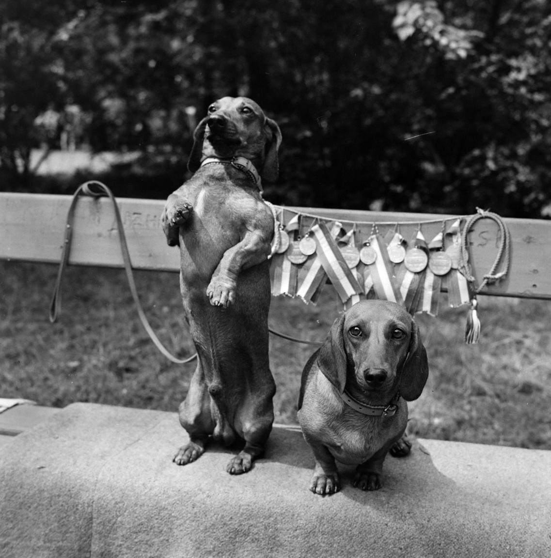 """A magyar kutya szó már a 16. században is meg-meg jelent írott szövegekben,. A nyelvészek szerint hangutánzó eredetű szó, amely A magyar nyelv történeti-etimológiai szótára szerint a kutyákat hívogató hanghatásból vált főnévvé. Elsődleges funkciójában a kölyökkutya vinnvogását, nvüszítését jeleníthette meg. Ehhez hasonló módon lett a """"cic"""" macskahívogató szóból szintén kicsinyítő képzővel cica."""
