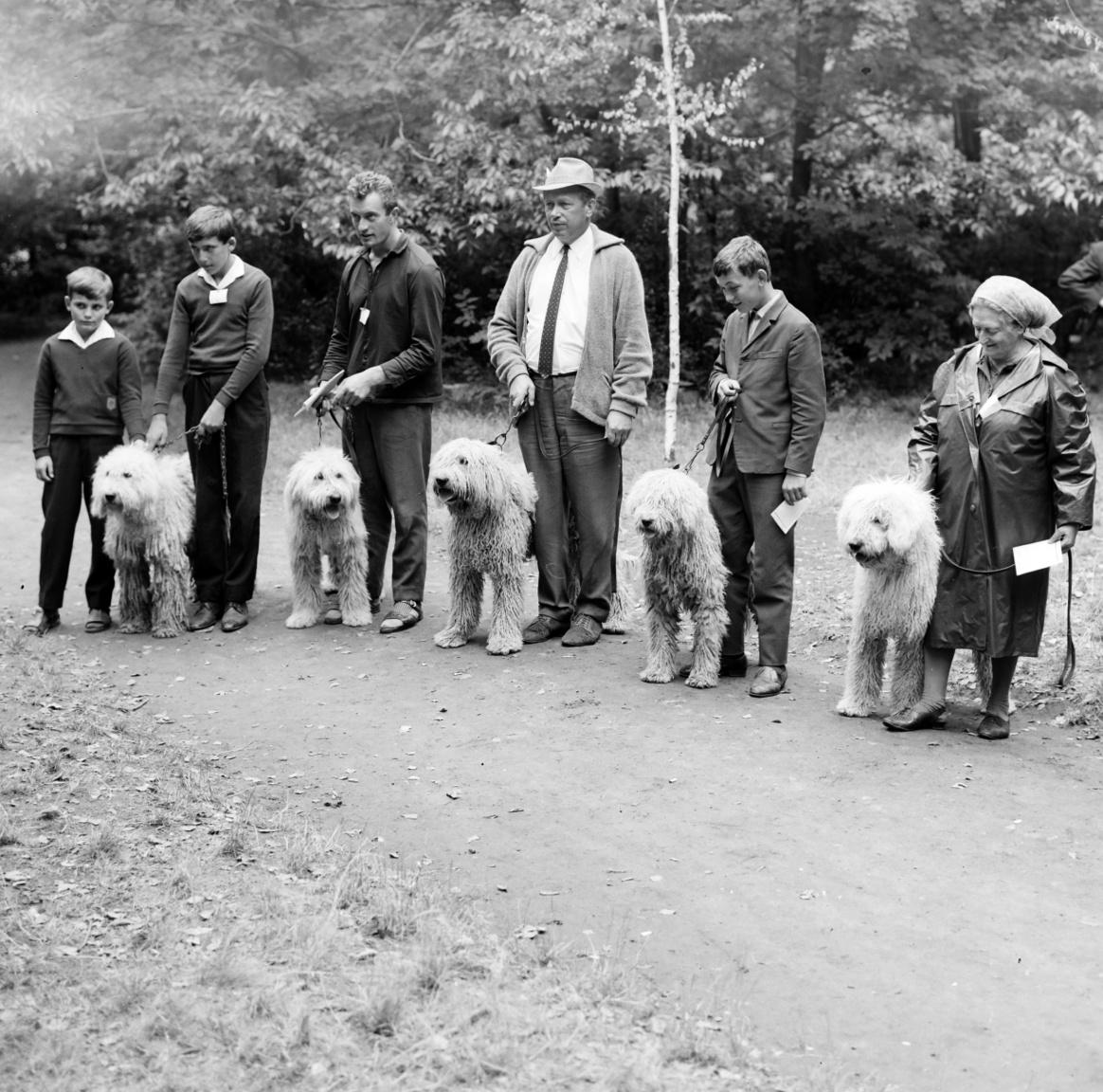 """""""Nem azért mondom, mert az én kutyám, de ilyen szép nincs még egy."""" Ezzel a gondolattal indult el 2400 kutyatulajdonos a budapesti nemzetközi kutya- kiállításra. Bojár kutyakiállításokon készült képei nemcsak A kutya hasábjain jelentek meg. Amikor az 1970-es budapesti kiállítással egyszerre tartották meg a Kynológiai Világszervezet kongresszusát, akkor az ő képe jelent meg az Ország-Világ riportjában is."""