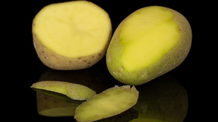 Tényleg mérgezést okoz a bezöldült krumpli?
