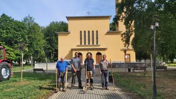 Jézus Szívét jelképező fákkal pótolták a csurgói templom kivágott fasorát