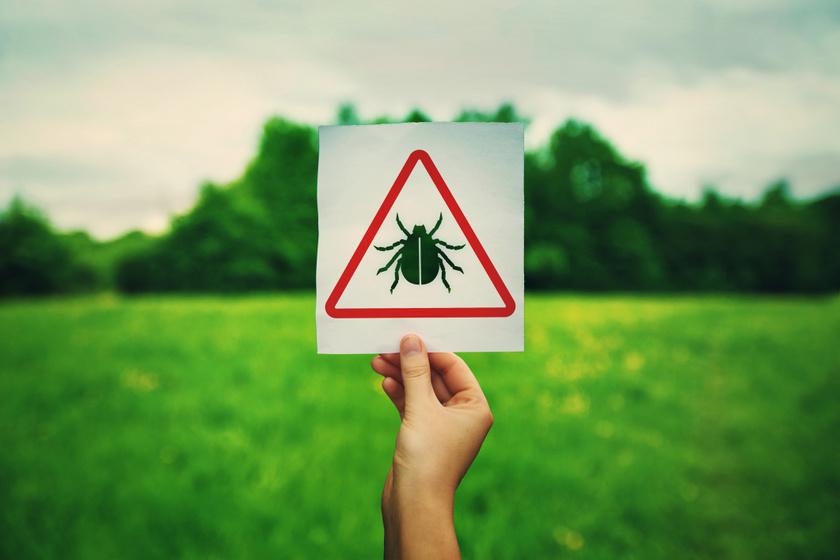 Két súlyos betegség, amit kullancsok terjesztenek: nem csak a Lyme-kór miatt kell aggódni