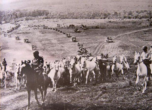 A Cowboy-hadműveletben megmentett lovakat hajtja az amerikai hadsereg