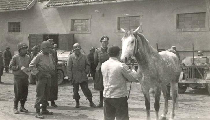 Reed ezredes egy német tiszt társaságában szemléli az egyik lipicai lovat