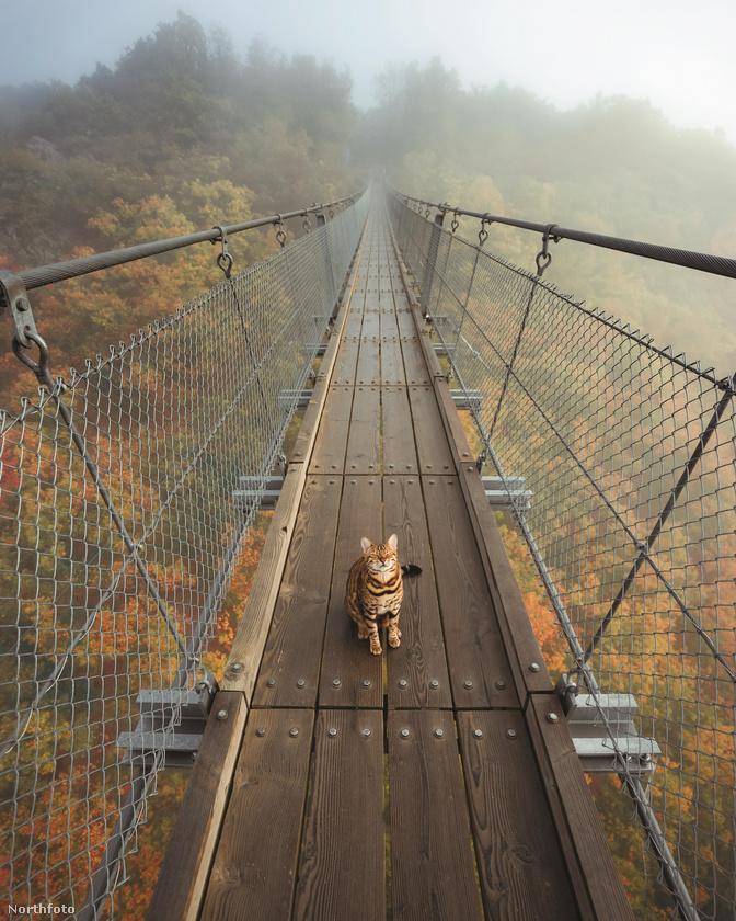 Nem beszélve erről a hídról, amin még emberként is félelmetes lehet átkelni