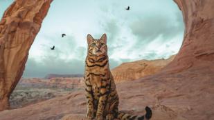 Még hogy a macska lakásba való - íme Suki, a macska, aki világutazó lett