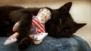A legsúlyosabb legális macskadrog: a macskamenta
